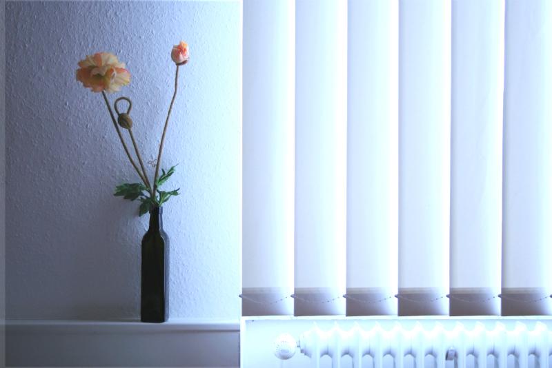 Piante da ufficio piante da appartamento ideare casa - Piante per ufficio ...